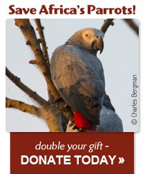 Save Africa's Parrots! Double your gift when you Donate Today!