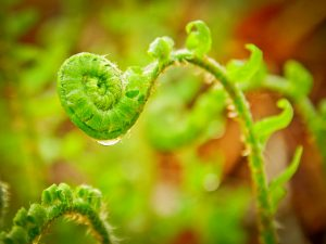Start The Change - image of fern uncurling