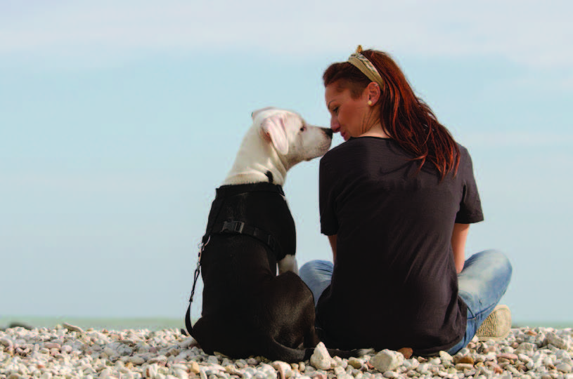 Dog and woman sitting on beach