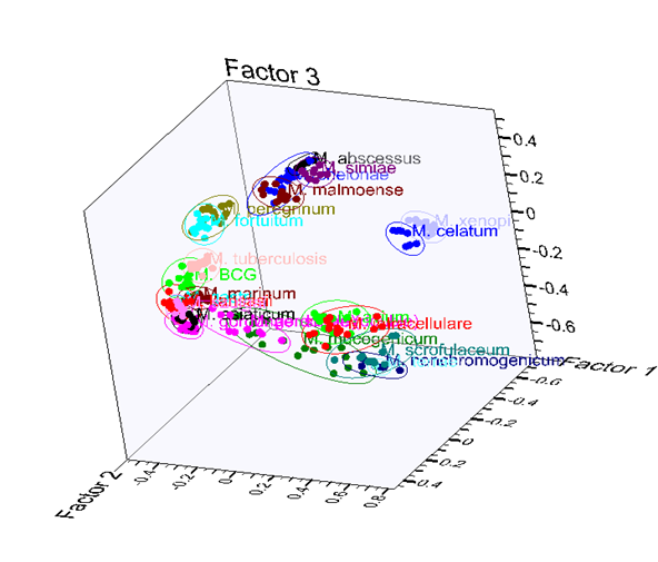 CDC Mycobacteria database as a 3D scores plot inside KnowItAll MVP