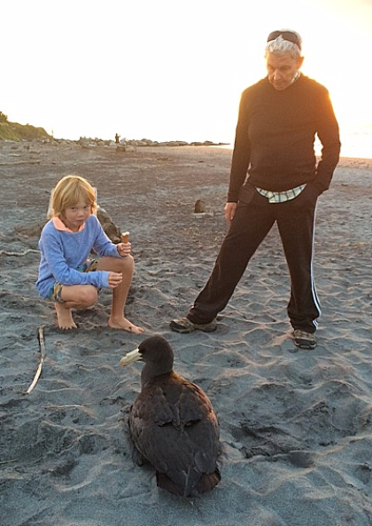 Jools Topp and Sebastian watch over a Southern giant petrel