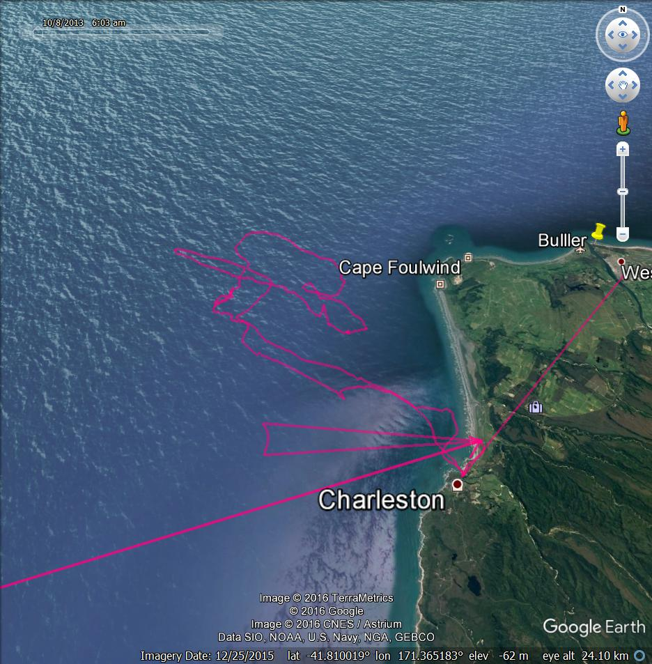 blue penguin foraging tracks from Charleston, October 2016