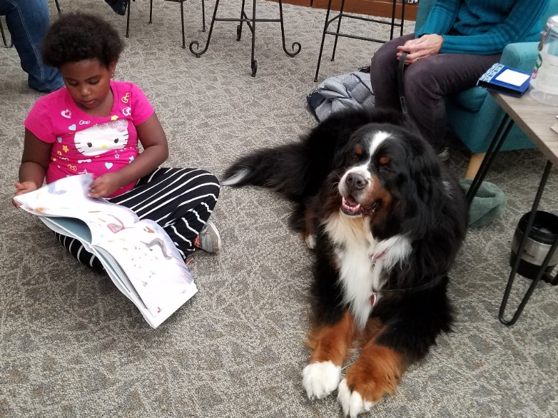 Young girl sitting next to a Bernese Mountain Dog, reading from a book