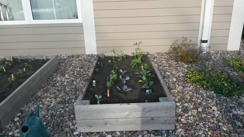 Raised garden bed with plants growing in it