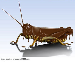 Chocolate Covered Insect Day