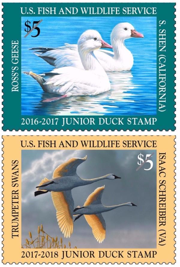 Junior Duck Stamp