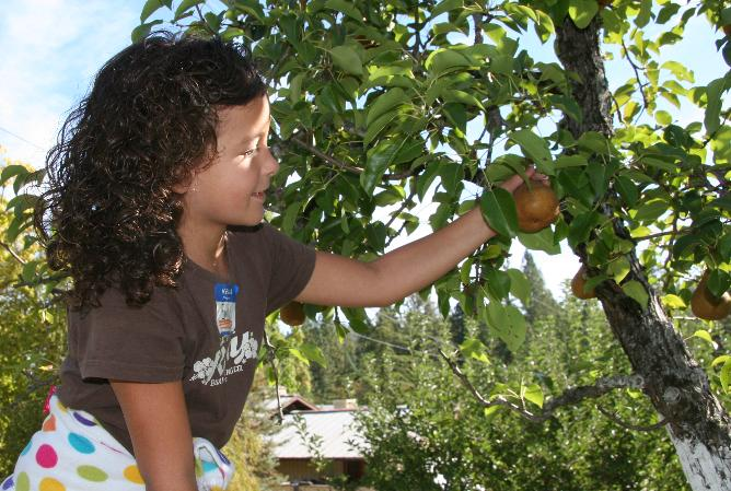 Girl picking pear