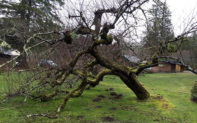 Tree before