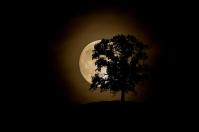 Moonrise by Michael Knapstein
