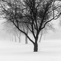 "Image ""December Fog"" by Michael Knapstein"