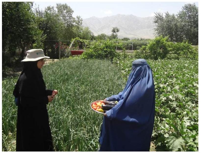 Afghan kitchen garden