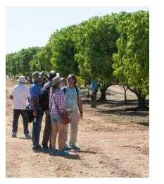 Mango Field Trip