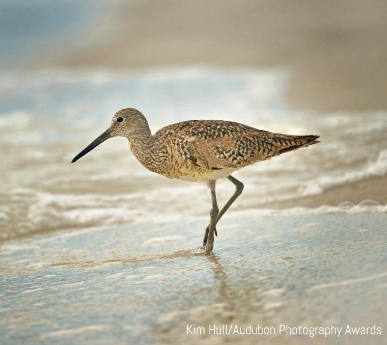 Kim Hull/Audubon Photography Awards
