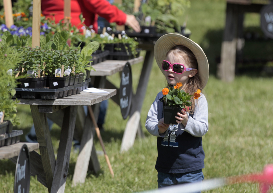 Elizabeth Asher, 3, of Vancouver, selects flower starts at the Pomeroy Farm Country Life Fair.
