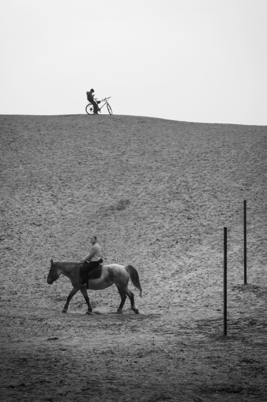A Horse And A Bike