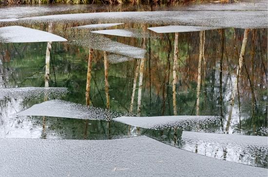 Ice, Rain, Tree Reflections