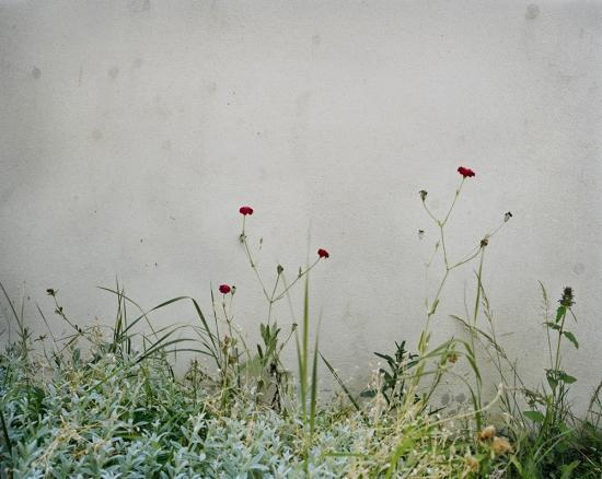 Simone's Garden No. 1