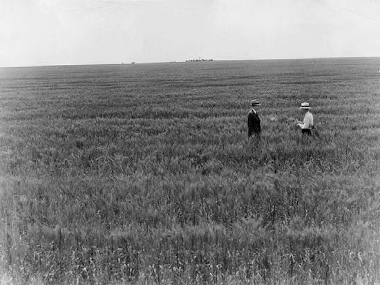 Wheat, 1934