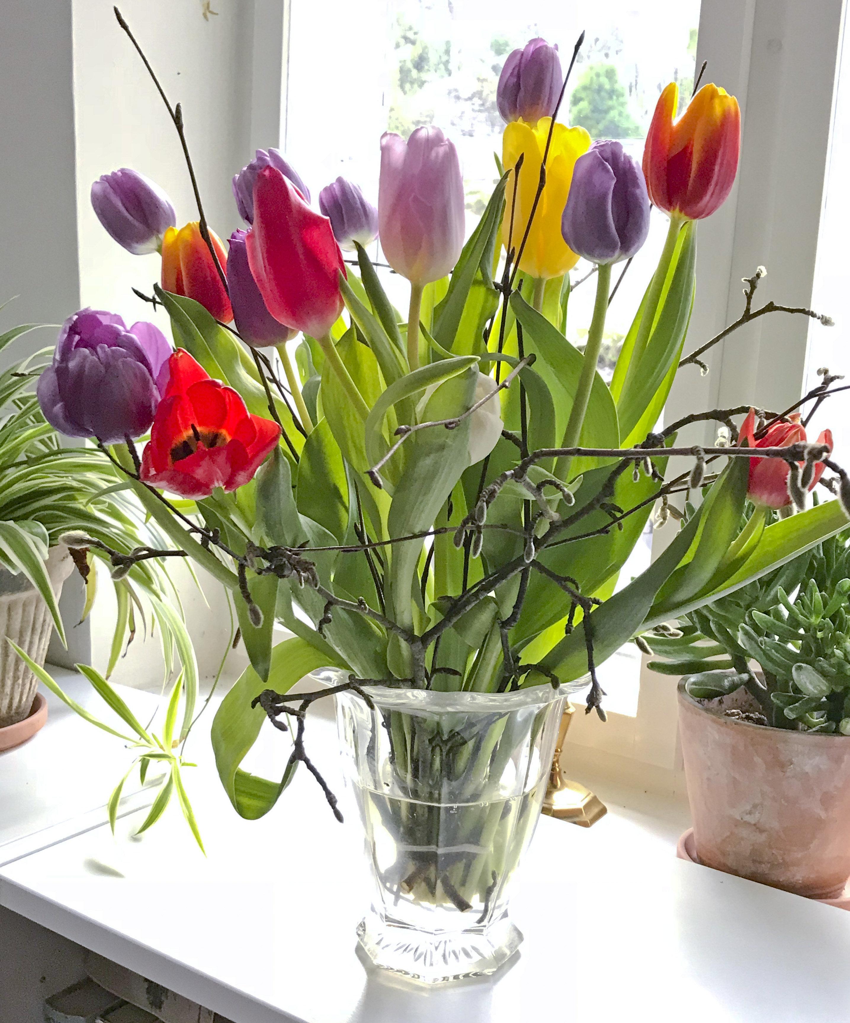 Tips til længevarende tulipaner