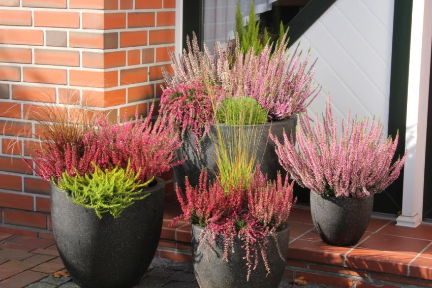 Bivenlige planter
