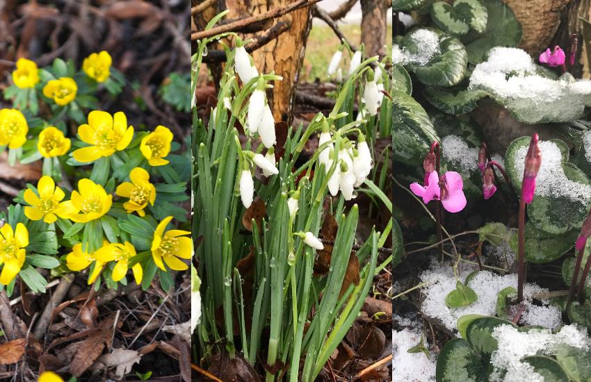 3 oplagte forårsbebudere
