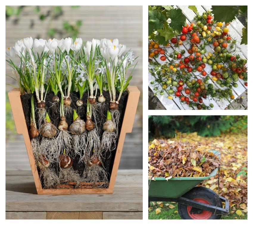 Brug en halv time i haven