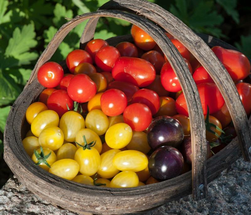 Det kan du bruge de mange tomater til