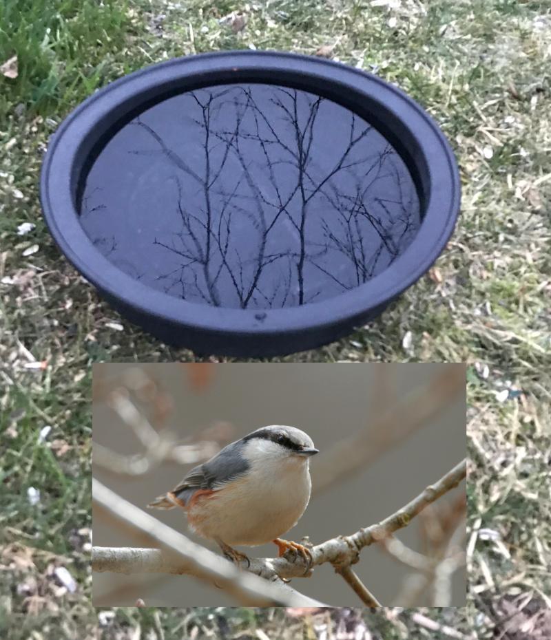 Tips til frosne fuglebade