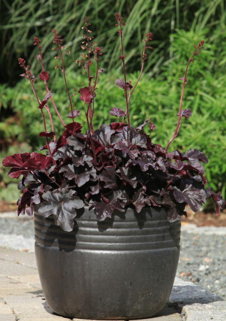 Sorte planter