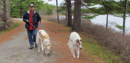 Figgy and Otto walking in Maine