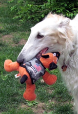 Figgy with Wounded Warrior Project toy