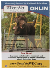 Ohlin, featured pet guest at Candlebay Inn