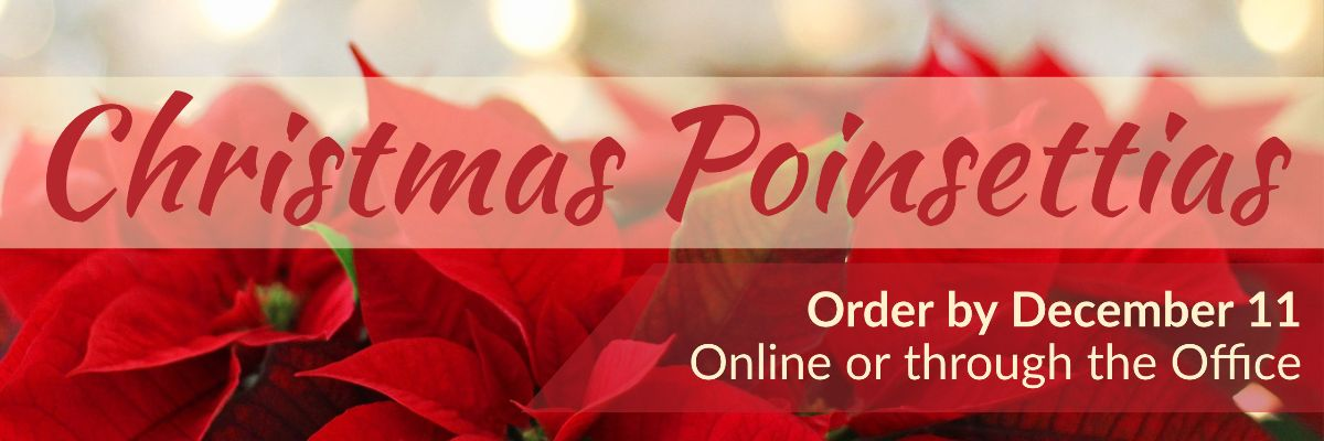 Order Christmas Poinsettias by December 11