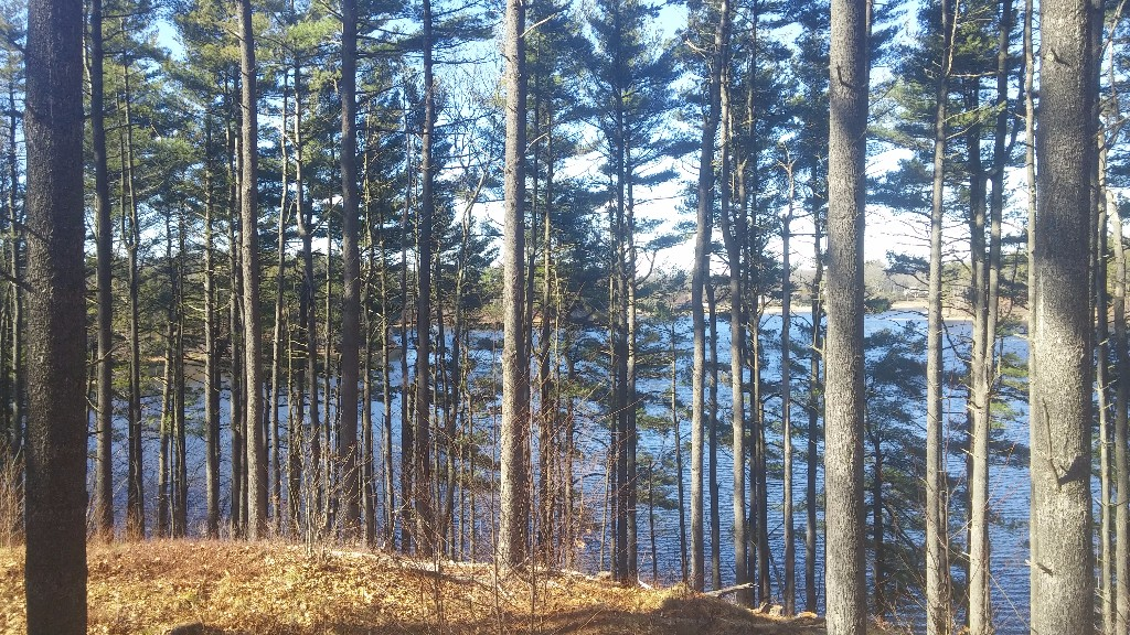 [View through trees of Sandra Pond]