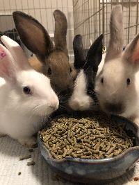 Texas baby bunny group