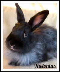 Thelonius