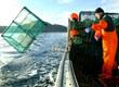 Creeling boat sustainable fishing