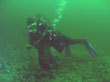 Diver collecting scallops