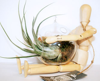 Wooden Manikin with Glass Vase and Tillandsia Plant