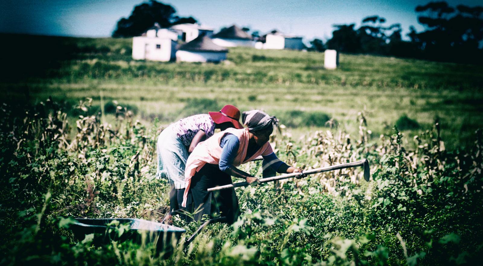 farmers E-Cape