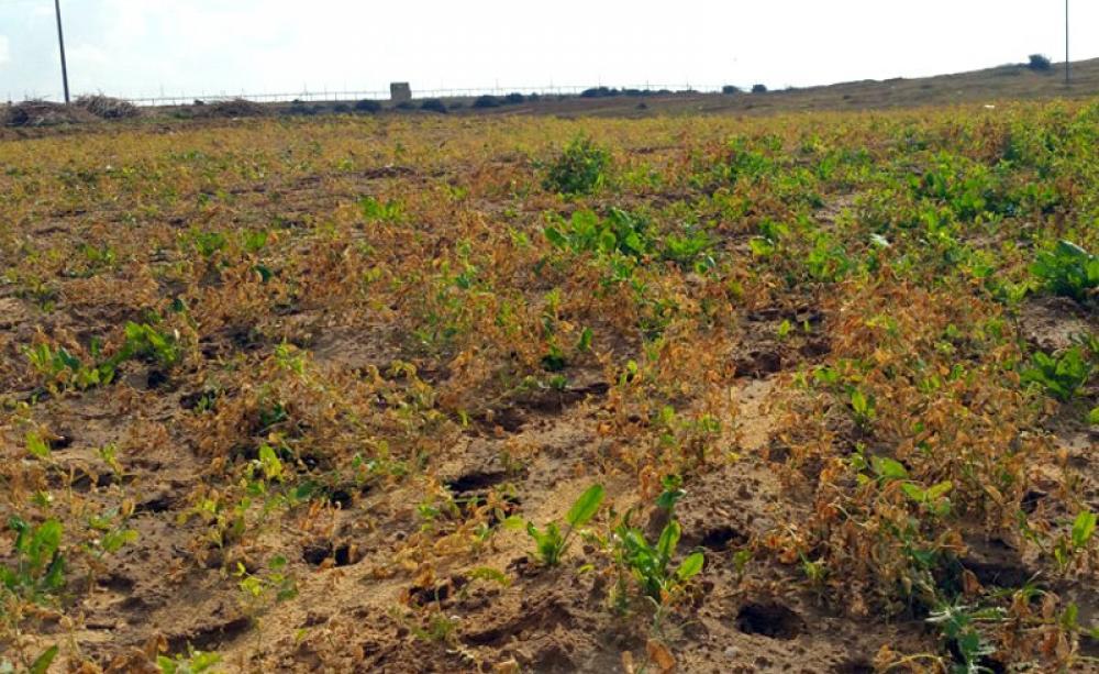 poisoned-fields