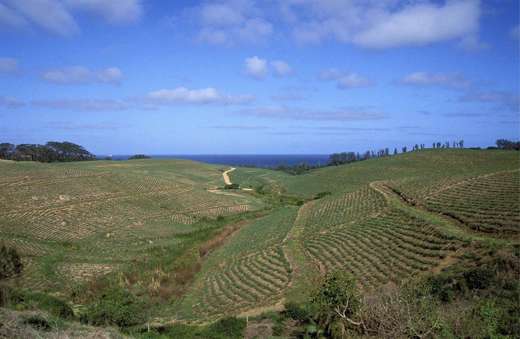ingonyama-land