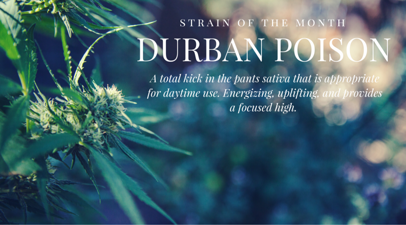 Strain of the Month: Durban Poison, a powerful sativa appropriate for day use