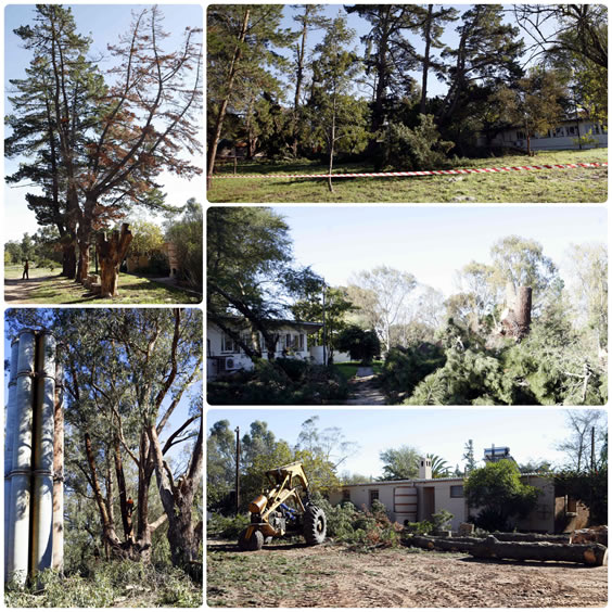 Tree felling at Ferry House