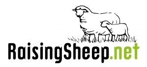 RaisingSheep.net