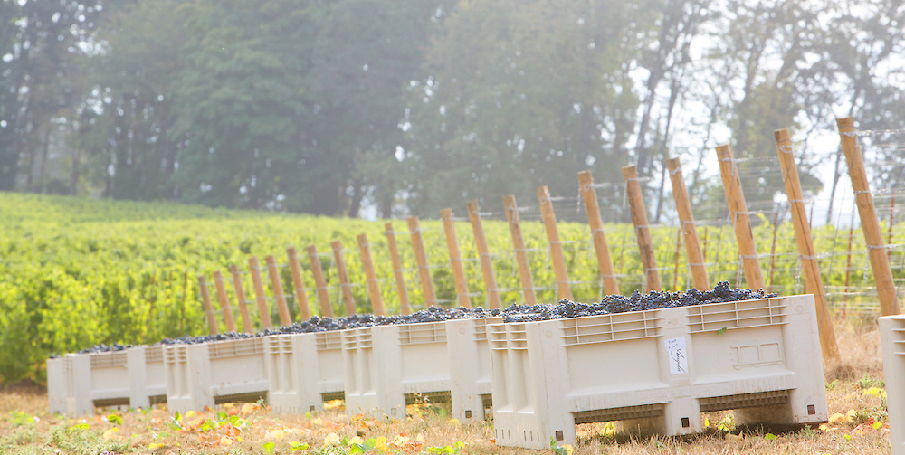 Fennwood Vineyard