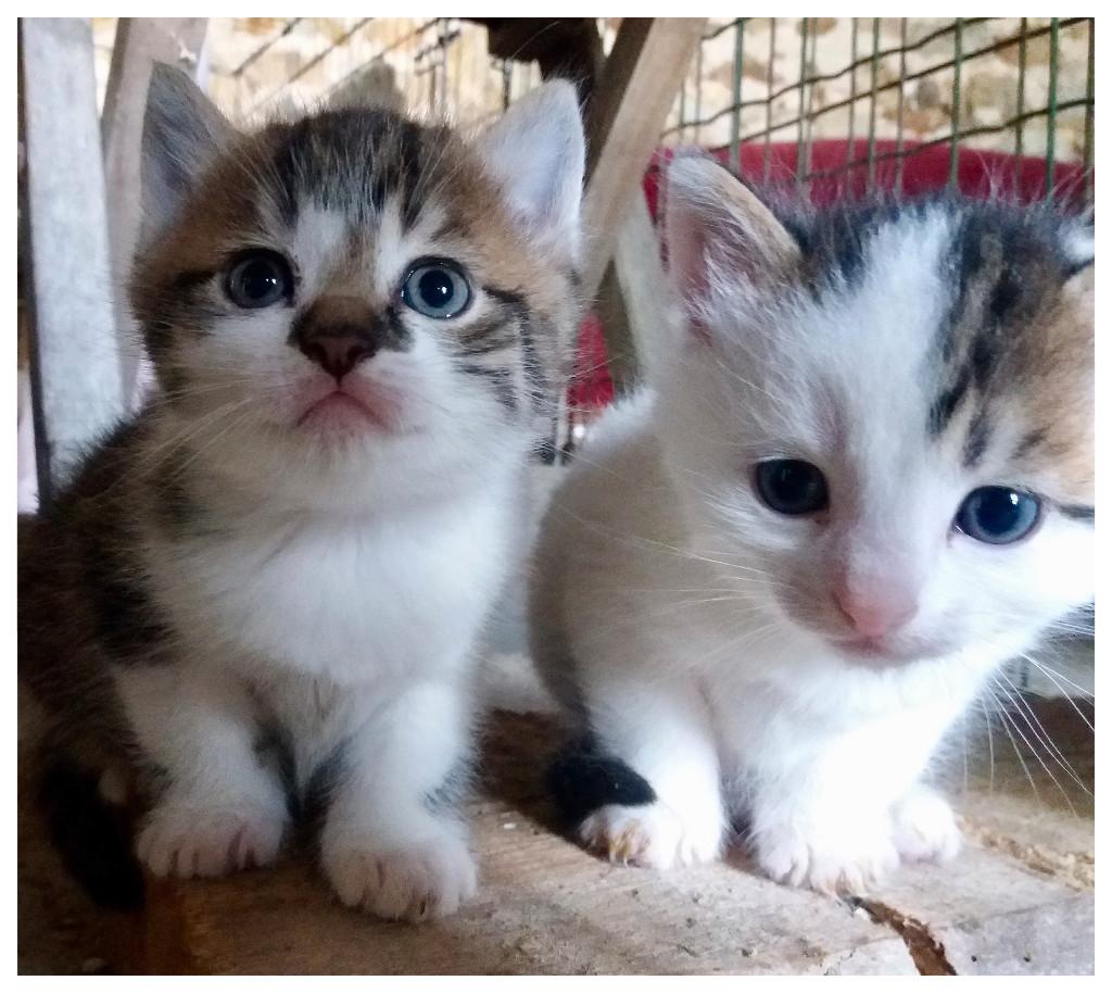Twee van de 4 kittens van Poesie kijken nieuwsgierig in de lens