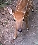 Help save a fawn by making a donation to Wild Things today!