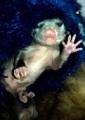 I'm a Baby Opossum!