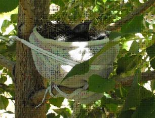 Baby birds in makeshift nest